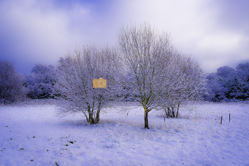 Nature photography in winter