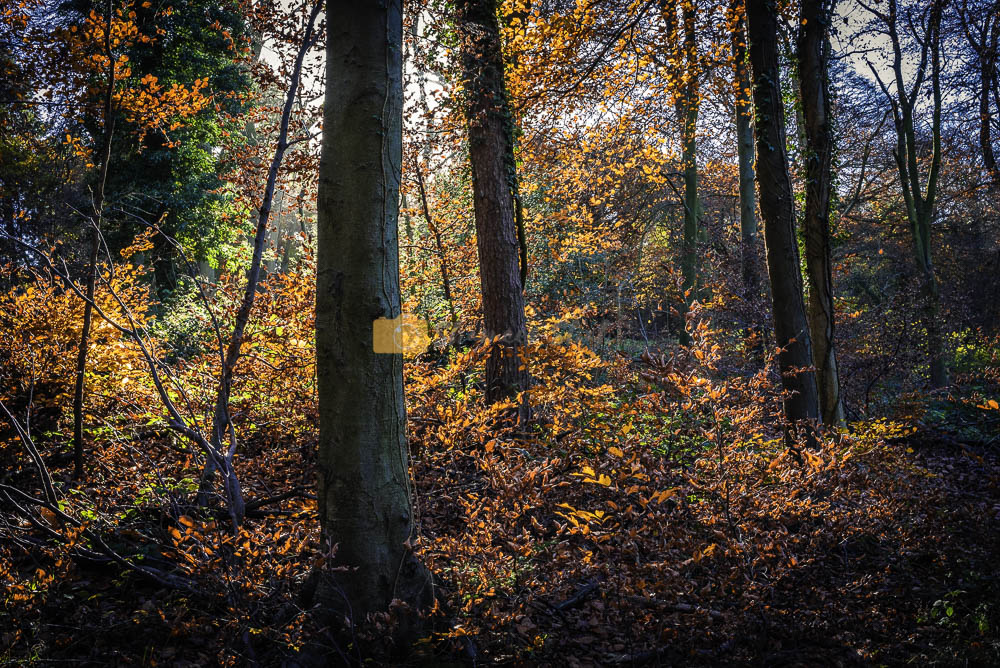 Woodland landscape photos