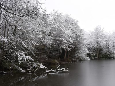 Frozen woodland lake