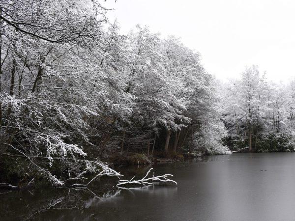 Frozen woodland lake