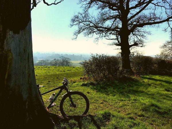 Local mountain bike trail