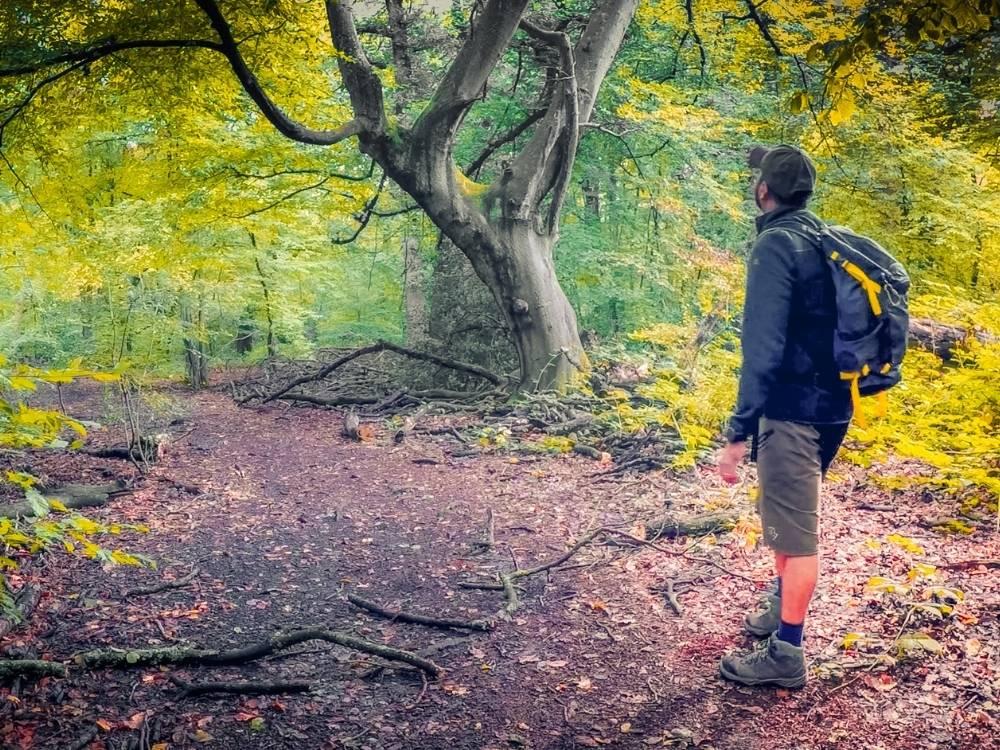 Bayhurst wood nature reserve